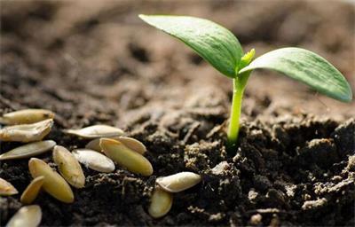 2017年种子种源免税进口计划发布