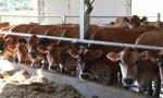 养殖业积累已久的几个隐患日益凸显 想长久立足必须解决